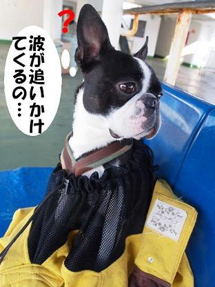 T-BOZ 神奈川川崎 とっこ.jpg
